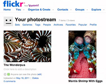 Publishing to Flickr